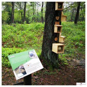 Educatieve speurtocht in het bos