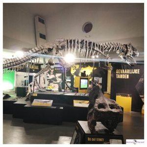skelet van t-rex levensgroot