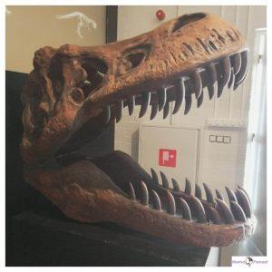 skelet bek met grote tanden van een dinosaurus