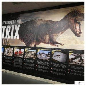 dinosaurus levensgroot op de muur met kleine plaatjes en tekst eronder