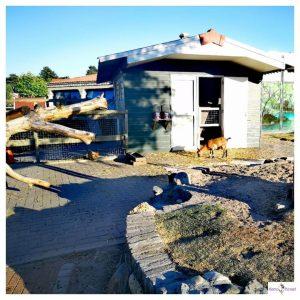 kinderboerderij op Resort Arcen met geitjes en kippen