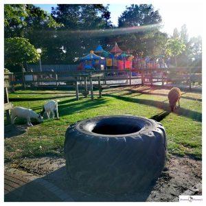 Kinderboerderij op Resort Arcen met zicht op de speeltuin