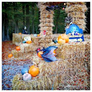 Ingang doolhof in halloween stijl met hooi, pompoenen en neppe vleermuizen