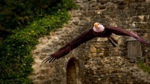 le bal des oiseaux fantomes roofvogel vogelshow puy du fou Les Epesses, Frankrijk