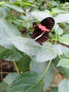 Orchideeenhoeve vlinders