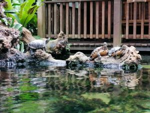 Orchideeenhoeve schildpadden Luttelgeest Flevoland