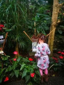 Speurtocht kinderen Orchideeenhoeve jungle Luttelgeest Flevoland