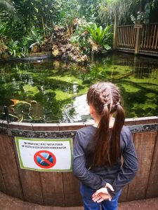 meervallen voeren Amazone Regenwoud Orchideeenhoeve Luttelgeest Flevoland