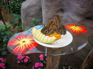 Vlinders Orchideeënhoeve Luttelgeest