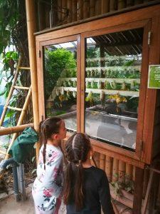 Vlinderkast Orchideeenhoeve jungle Luttelgeest Flevoland