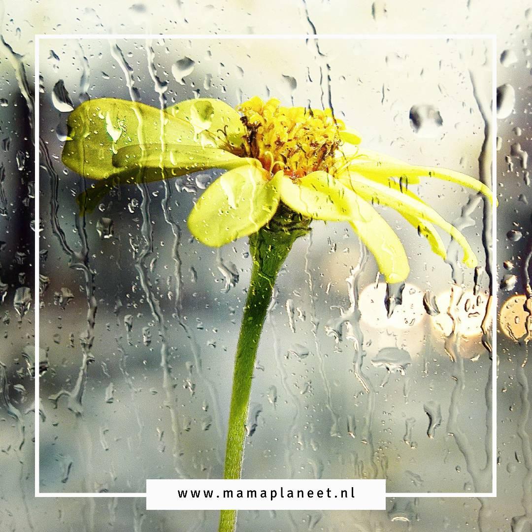 geld besparen op water door regenwater gebruiken via regenton MamaPlaneet.nl