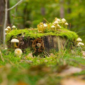 boswandeling maken met kinderen in kabouterbos kabouterpad lopen MamaPlaneet.nl