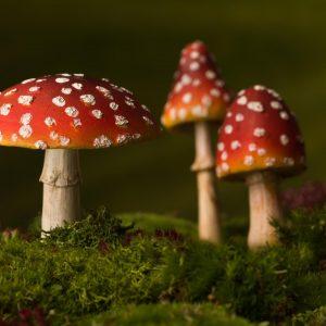 kabouterpad lopen met kind en paddenstoelen en kabouters zoeken in het kabouterbos MamaPlanee.nl