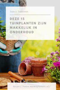 Makkelijke tuinplanten in een onderhoudsarme tuin MamaPlaneet.nl