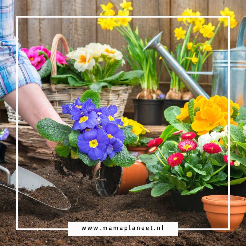 Welke tuinplanten zijn makkelijk in onderhoud MamaPlaneet.nl