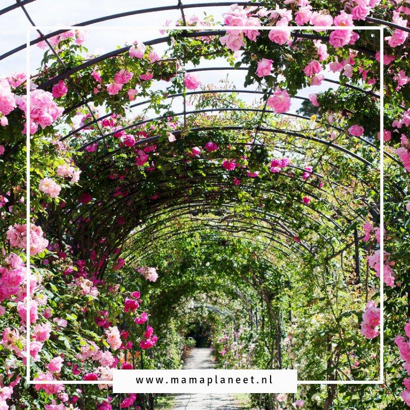 Romantische Engelse cottagetuin met rozen en hartman tuinset tips en inspiratie mamaplaneet.nl